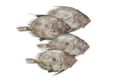 Fresh John Dory fishes Royalty Free Stock Image