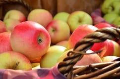 Fresh juicy apples in basket Royalty Free Stock Photos