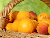 Fresh juicy apricots Stock Photos