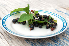 Fresh juicy berries of black currant Stock Images