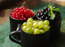 Fresh juicy berries of a gooseberry, black and red currant in circles. Royalty Free Stock Photo