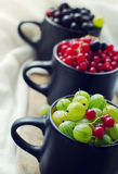 Fresh juicy berries of a gooseberry, black and red currant in cups. Royalty Free Stock Photo