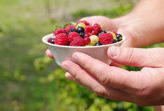 Fresh juicy berries, raspberries, currants, blackberries, a gooseberry in an white plate in the man's hands. Against greens Stock Photo