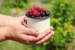 Fresh juicy berries of raspberry and currant in an iron mug in the woman's hands. Against greens Royalty Free Stock Image