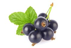 Fresh Juicy Black Currant With Green Leaf, On White Background. Royalty Free Stock Photo