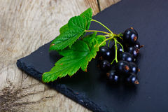 Fresh Juicy Blackcurrant Stock Image