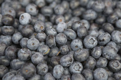 Fresh juicy blueberries on the market. Fresh juicy  blueberries on the market Royalty Free Stock Photography