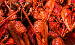 Fresh juicy boiled crawfish closeup. food background. top view. Stock Photo