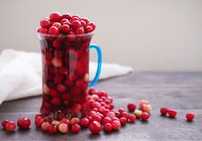 Fresh juicy cranberry in a glass transparent mug Stock Image
