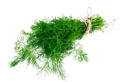 Fresh Juicy Dill Isolated on White Background. Studio Photo Royalty Free Stock Images
