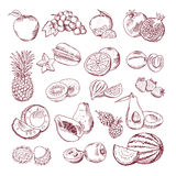 Fresh and juicy fruits. Vector hand drawn illustration isolate on white background. Doodle pictures set Royalty Free Stock Photography