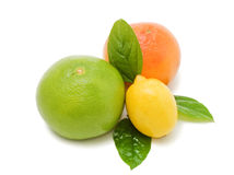 Fresh juicy grapefruits with green leafs Royalty Free Stock Photos