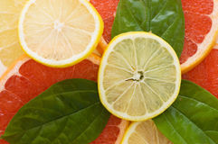 Fresh juicy grapefruits with green leafs Royalty Free Stock Photo