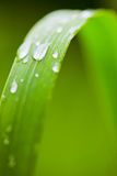 Fresh and juicy grass. Beautiful fresh and juicy green grass Royalty Free Stock Photography