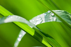 Fresh and juicy grass. Beautiful fresh and juicy green grass Stock Photography