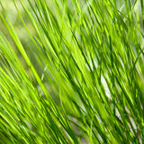 Fresh and juicy grass Stock Photography