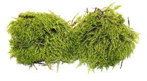 Fresh juicy green moss  on white. Fresh  juicy green moss  on white Stock Photos