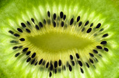 Fresh juicy kiwi fruit slice. The kiwifruit or Chinese gooseberry is the edible berry of a woody vine in the genus Actinidia. The most common cultivar group of Royalty Free Stock Photo