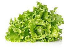 Fresh juicy leaves of lettuce Stock Images
