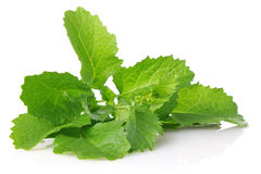 Fresh juicy leaves of salad mustard Stock Photography
