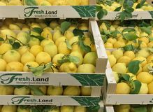 Fresh juicy lemons with green leaves in boxes at a market. Copenhagen, Denmark - April 19, 2019 royalty free stock photos