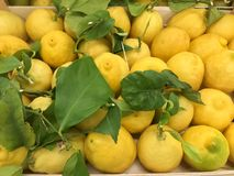 Fresh juicy lemons with green leaves at a market. Stock photo stock image