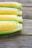Fresh juicy maize Stock Images