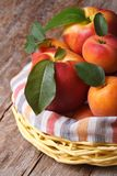 Fresh juicy nectarine, peaches and apricots in a basket Stock Photos