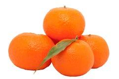 Fresh juicy oranges Stock Images