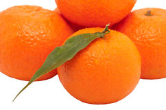 Fresh juicy oranges Royalty Free Stock Image