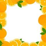 Fresh Juicy Oranges Stock Photos