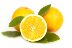 Fresh juicy oranges with leaves Stock Photos