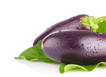 Fresh juicy organic eggplants with green leaves Royalty Free Stock Photos