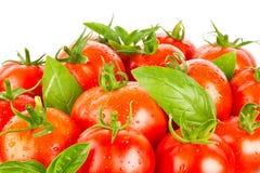 Fresh juicy organic tomatos and green leaves of basil Royalty Free Stock Image