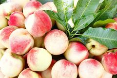 Fresh juicy peaches Royalty Free Stock Photos