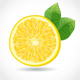 Fresh juicy piece of lemon  Stock Photos