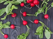 Red fresh radish on wooden table. Fresh juicy radish on a dark wooden background Stock Photos