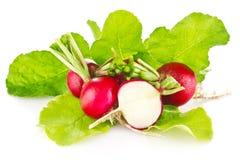 Fresh juicy radish with green leaves. On white background Stock Image