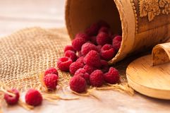 Fresh juicy raspberries. Fresh, juicy raspberries scattered on the table from bast banks Royalty Free Stock Photo