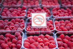 Fresh juicy raspberry on the market Stock Images