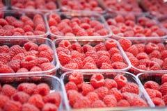 Fresh juicy raspberry on the market Stock Photography