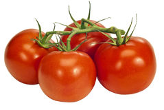 Fresh Juicy Red Tomatoes On The Vine Royalty Free Stock Photography