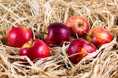 Fresh Juicy Rustic Red Apples on Straw Royalty Free Stock Image