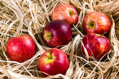 Fresh Juicy Rustic Red Apples on Straw Stock Images