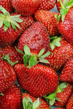 Fresh juicy strawberries Royalty Free Stock Photography