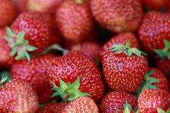 Fresh juicy strawberries. A load of fresh red strawberries Stock Photo