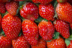 Fresh juicy strawberries. Selective focus and close up shot Stock Photos