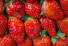 Fresh juicy strawberries. Selective focus and close up shot Stock Photography