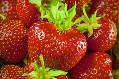 Fresh and Juicy Strawberrys Stock Photography