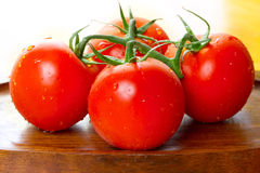 Fresh juicy tomatoes Stock Photography